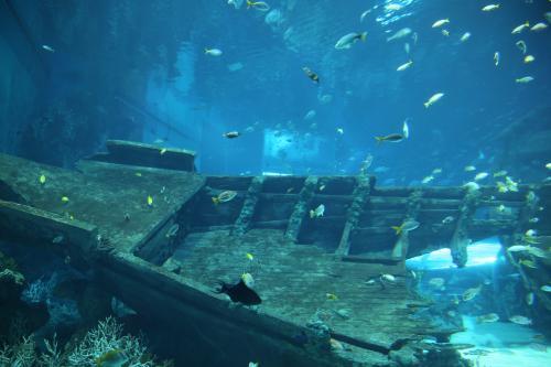深海沉船钓点的选择